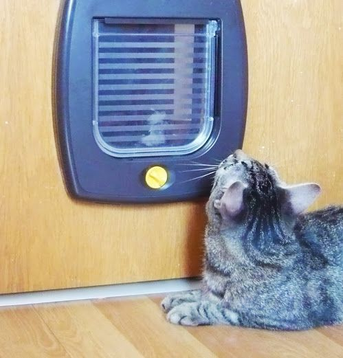 Montaj usita acces pisica in usa de Lemn