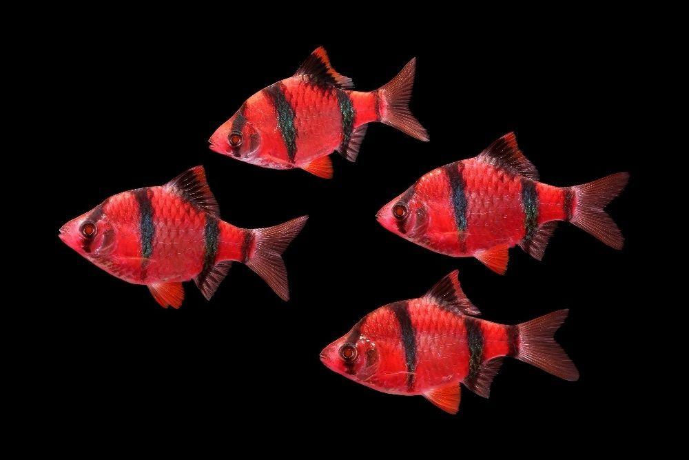 """Флуоресцентные светящиеся рыбки в зоомагазине """"нептун"""""""