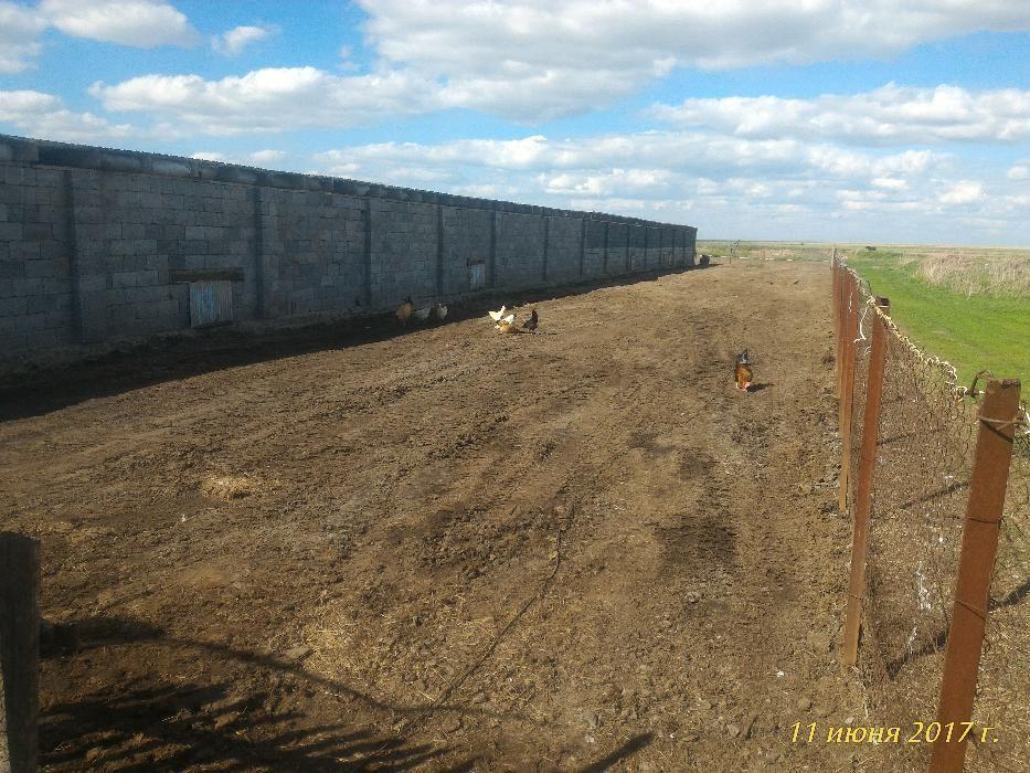 Ферма Производственная Промышленная База для Скота Птицы