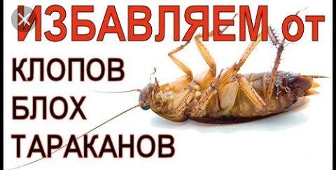 Уничтожение КЛОПОВ, тараканов. СЭС ! Гарантия!