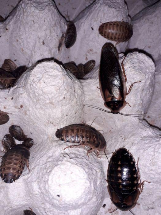 Vând hrană vie pentru reptile tarantule pasari si diverse mamifere