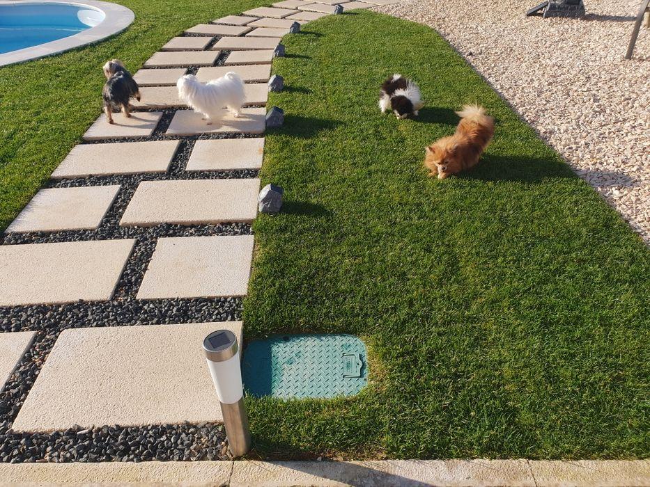 Cachorros Várias Raças