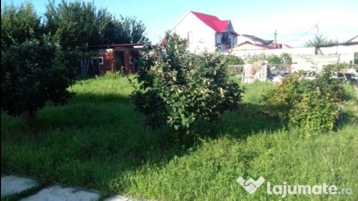 Vanzare  terenuri constructii  3900 mp Satu Mare, Martinesti  - 3000 EURO