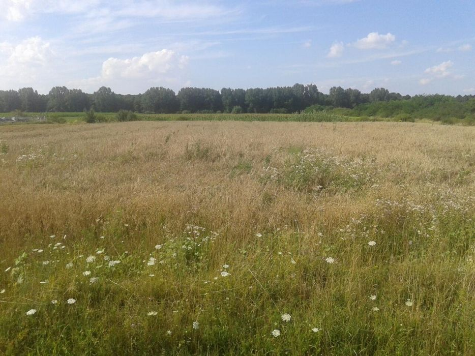 Vanzare  terenuri constructii Satu Mare, Livada  - 90000 EURO