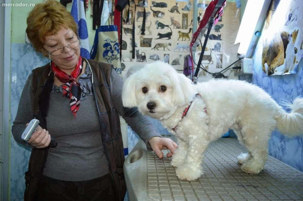 Frizerie canina si felina - Pet shop E3, Tulcea