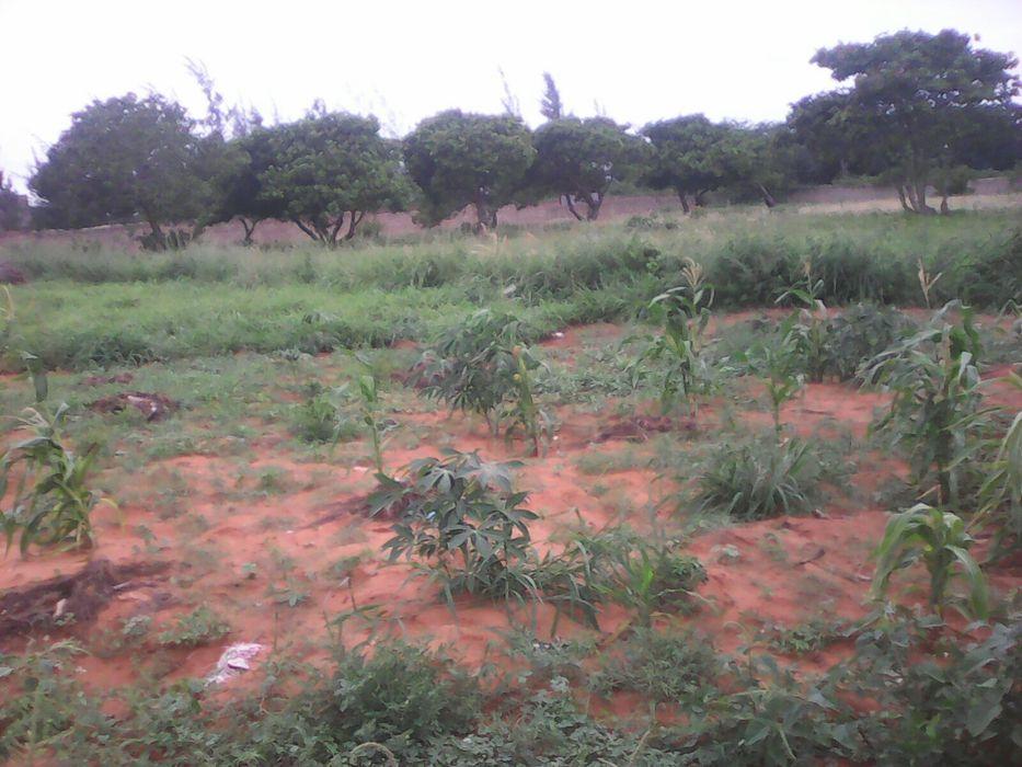 Vendo tereno 60 por 50 na berma da estrada no guava