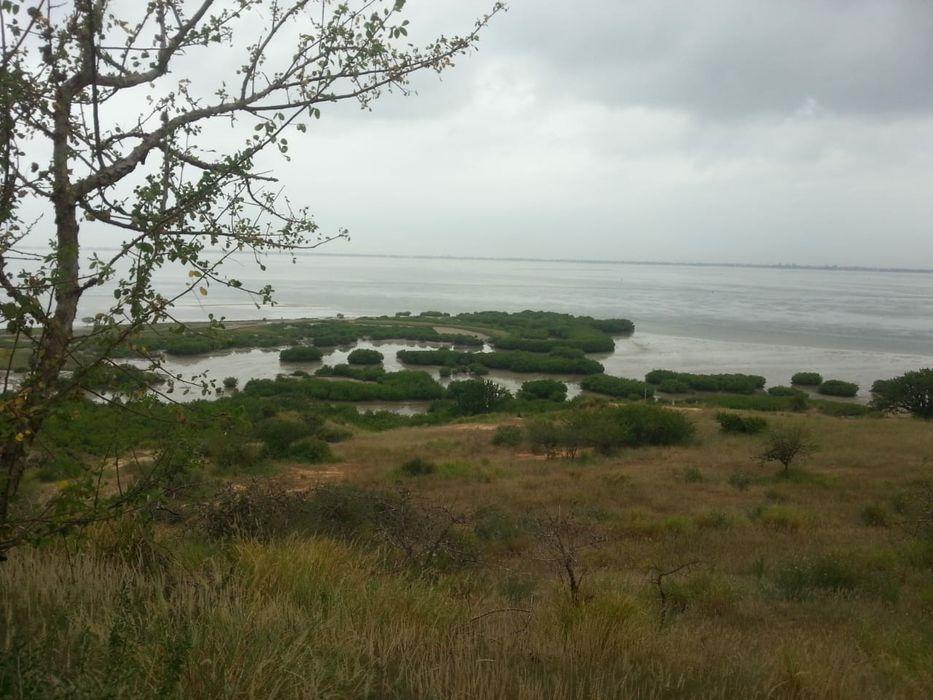 Vende se este terreno de 3 hectares no bom Jesus por ao lado da CIF