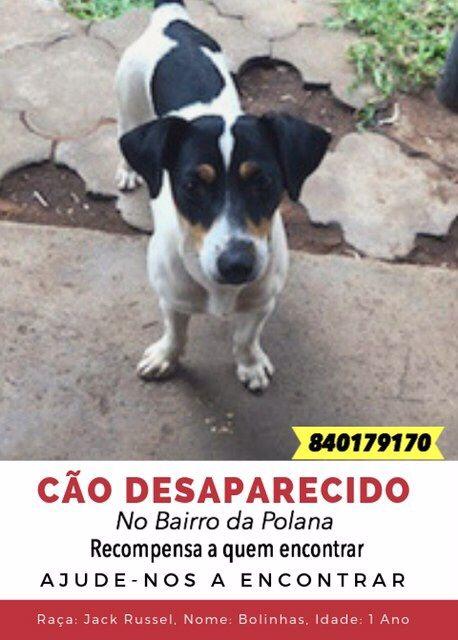 Cão desaparecido