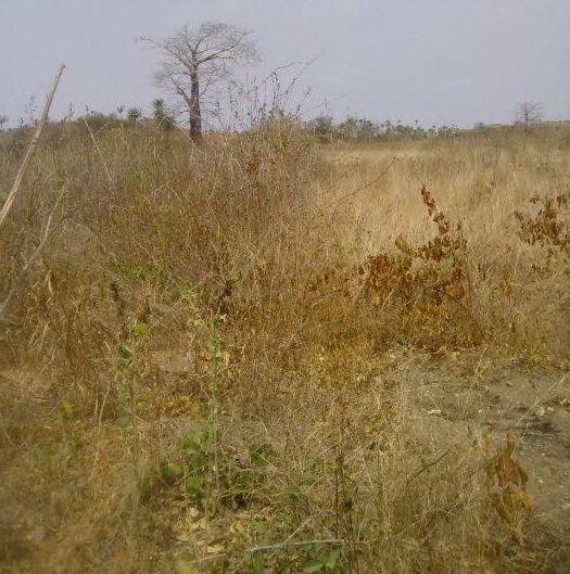 Vende-se 5 hectares na Funda (Funda Vila), totalmente legalizado, liga