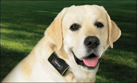 Уникално GPS Устройство за проследяване на Кучета (GPS за кучета)