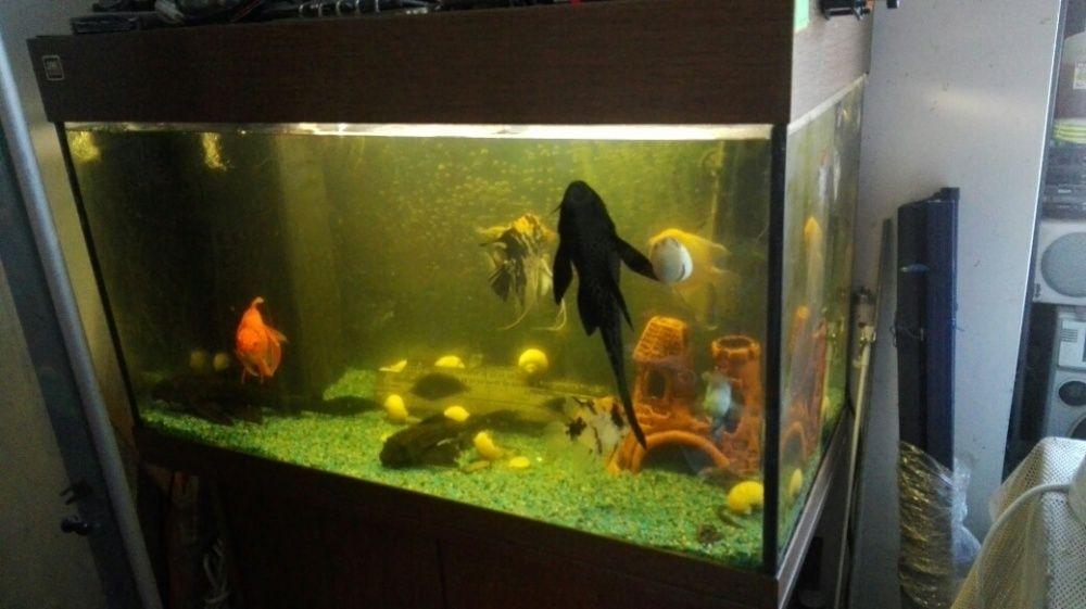 schimb pesti+acvariu