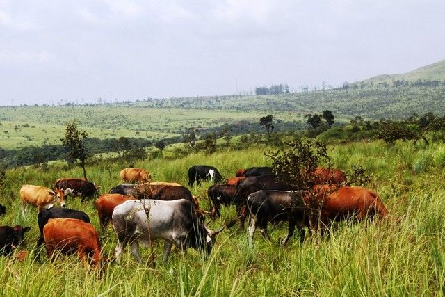 Vende-se Fazenda Agropecuária Camabatela