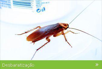 Exterminação de baratas | Erradicação de baratas | Eliminação de barat