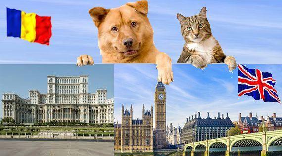 Transport caini si pisici autorizat Anglia