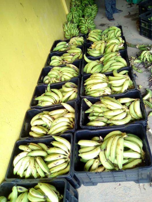 Vendemos por encomendas banana pão banana de mesa ,limão,tomate,abacax