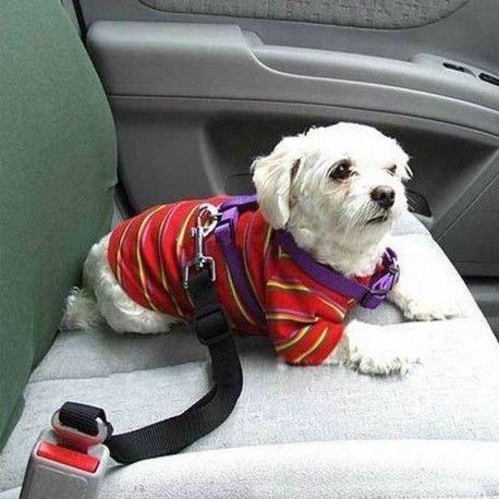 Колан за кучета за автомобил
