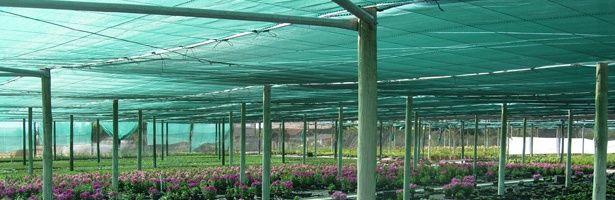Plasa cu filtru UV destinata umbririi culturilor agricole:solarii,sere