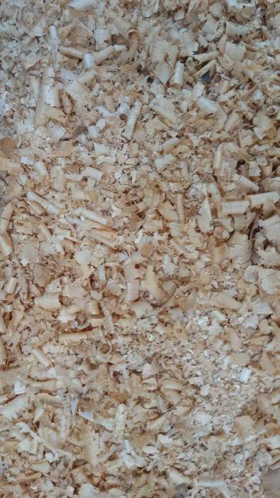 Талаш от суха иглолистна дървесина