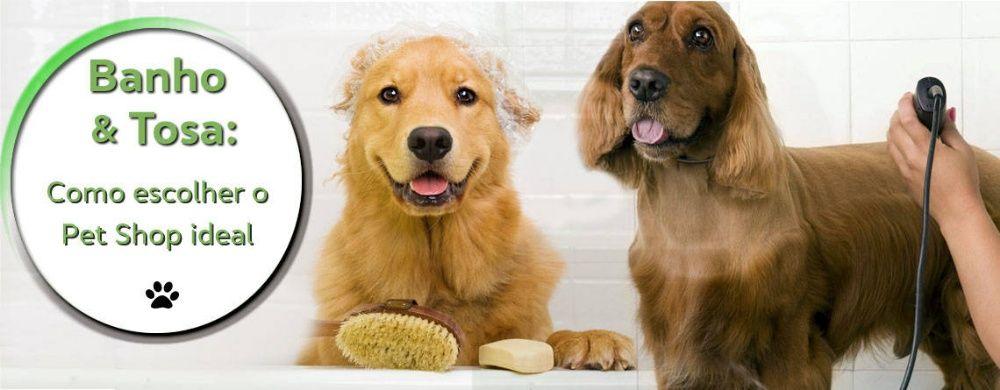 Veterinários Ao Domicílio: Cuidados de Alta Qualidade ao Seu Animal