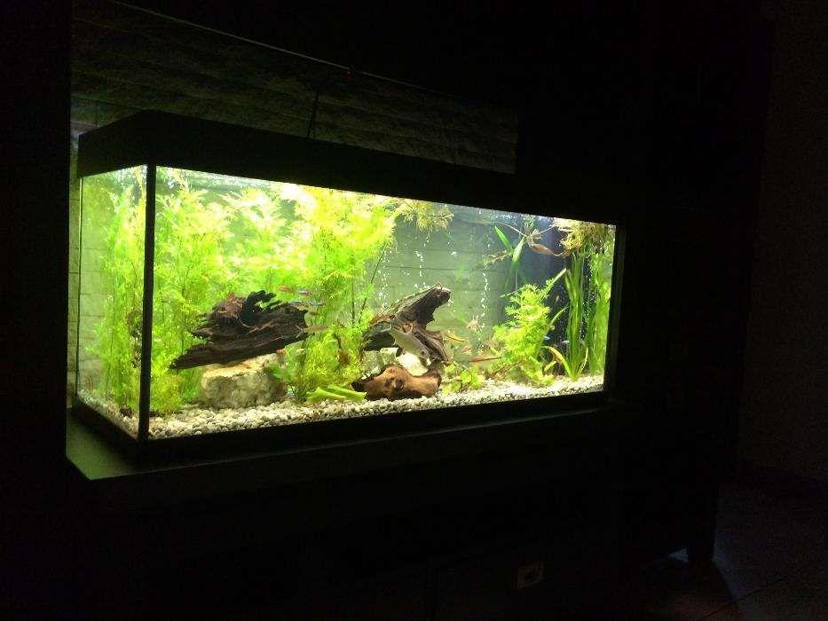 Amenajari si intretinere acvarii, acvariu