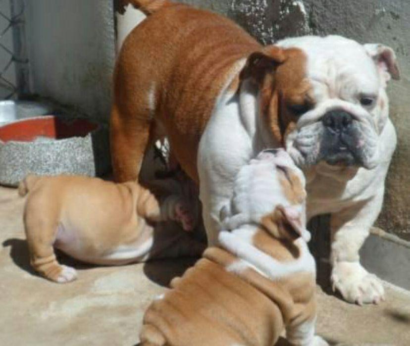 Animais domésticos há venda