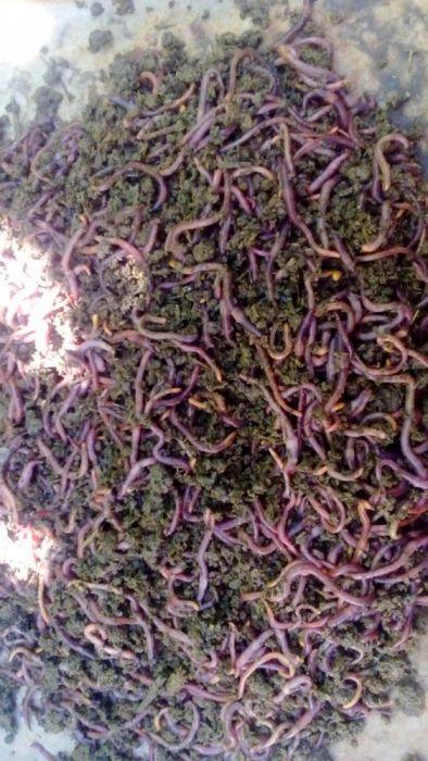 Реализуем червя