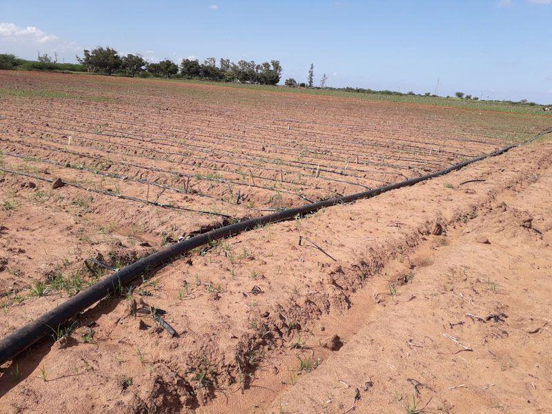 Vende-se propriedade Agro-Pecuaria numa 550ha, documentado, em Boane