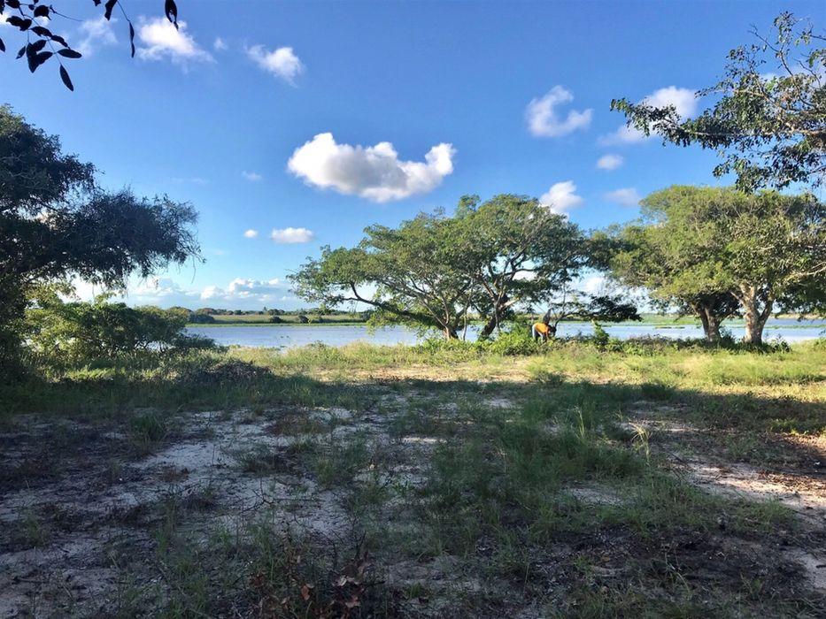 Macaneta River Frontage Property/490hectares Marracuene - imagem 1