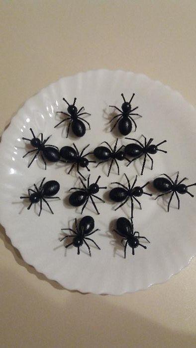 Шишчета мравки