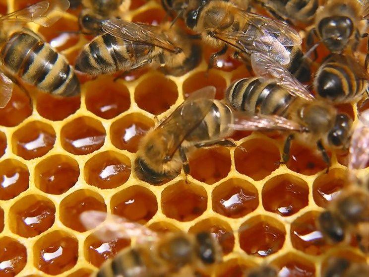 Мёд натуральный с доставкой.