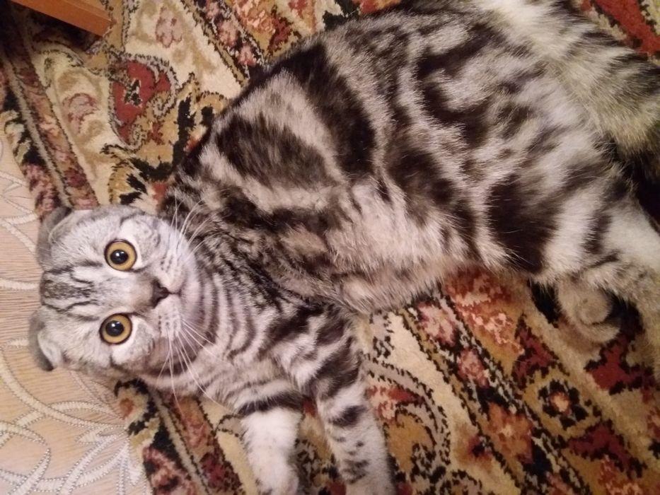 Кот для вязки!
