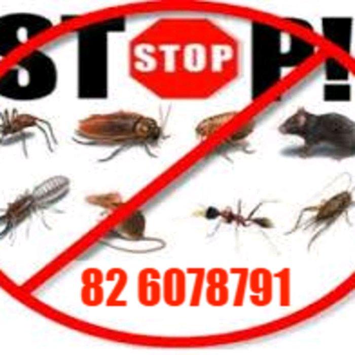 STOP Pragas em sua casa