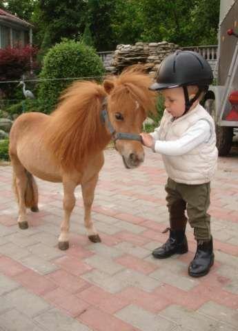 Мини лошадки фалабелла