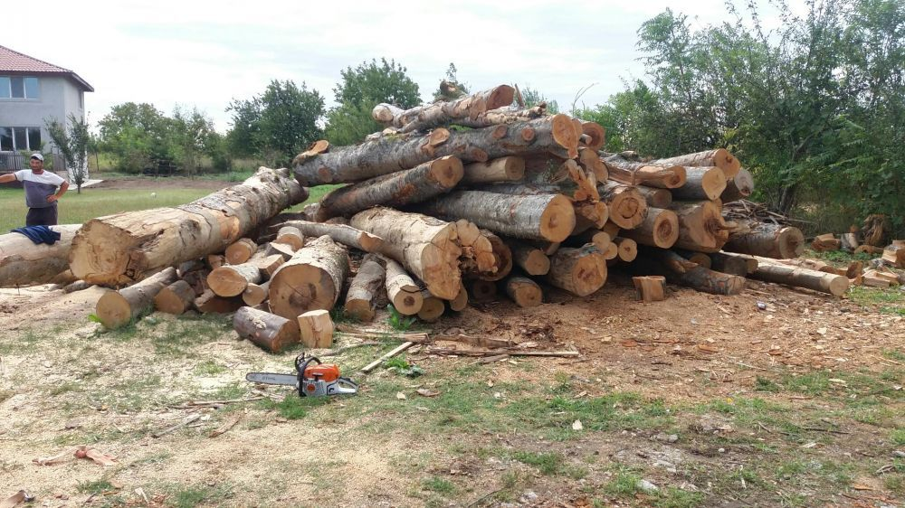 Depozit lemne de foc