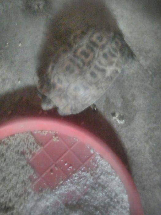 Vendo tartaruga