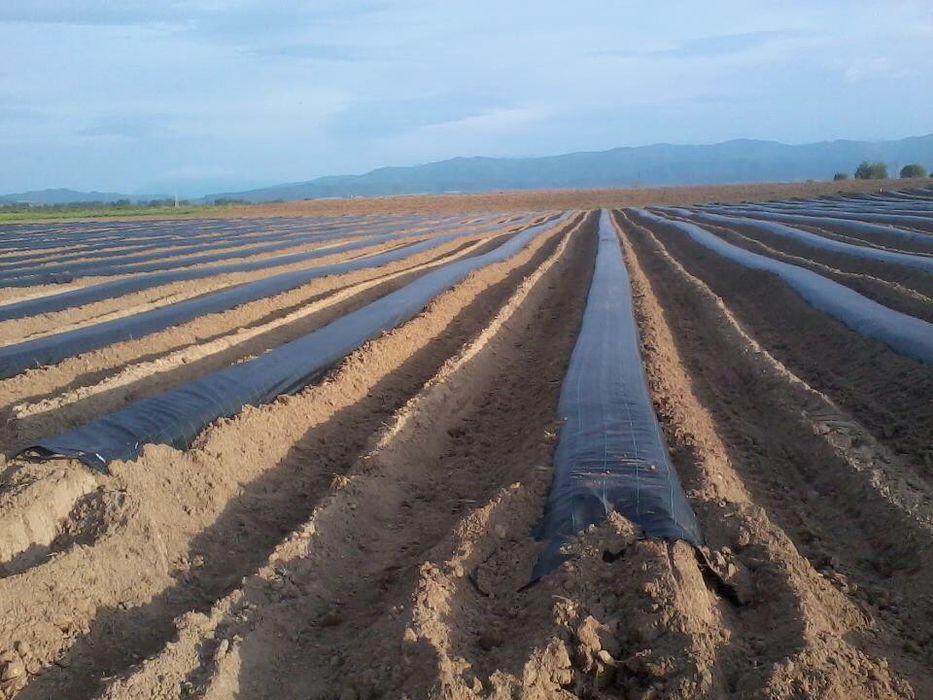Agrotextil Mulcire 2x100ml REZISTENTA MINIM 5 Ani,Tratata UV,100gr/mp, Bucuresti - imagine 2