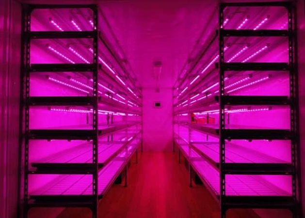 Светодиодное фито освещение для цветов и растений LED фонарь-планка