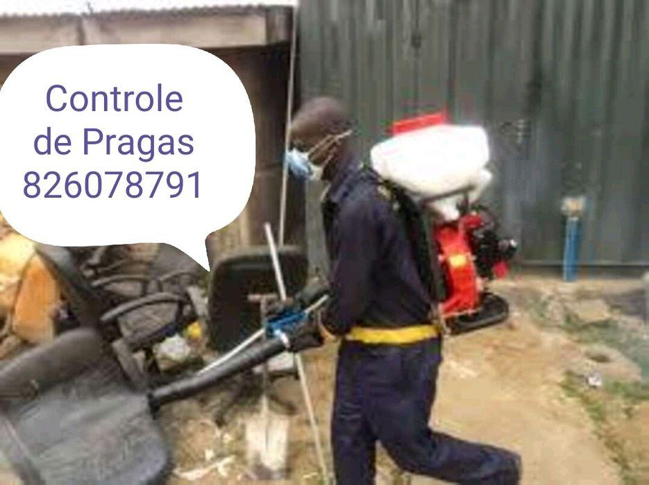 Serviços de Fumigaçao! Controle de Pragas