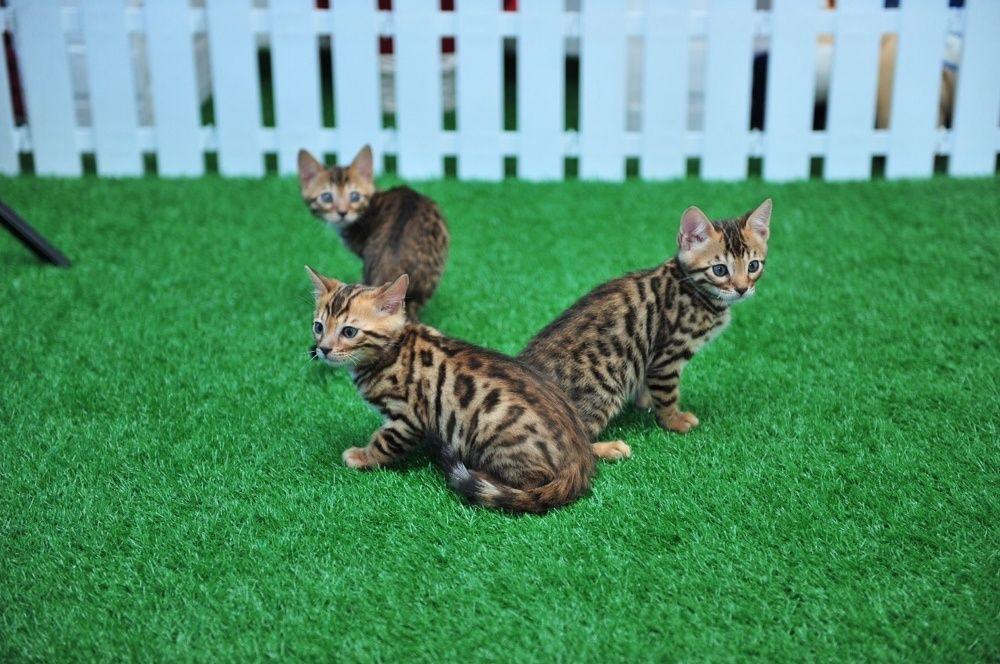 Яркие котята