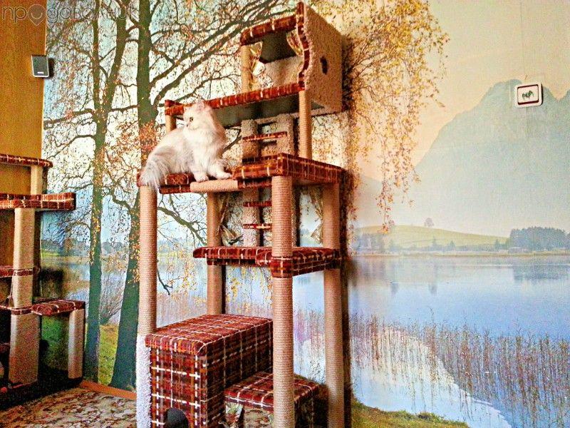 Катерушка-къща за котки