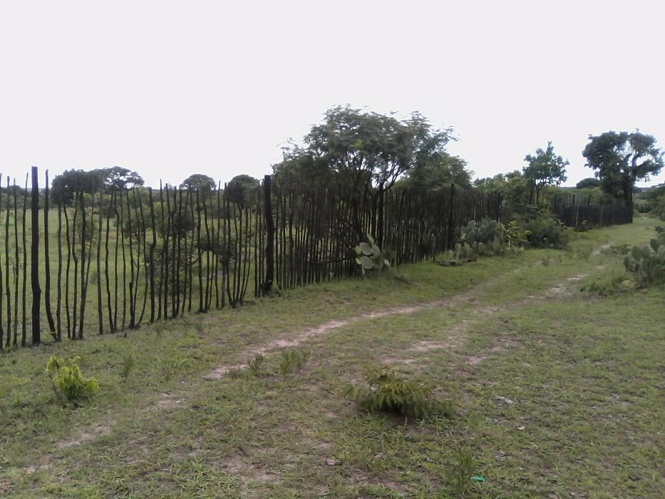 Vendo terreno fértil para cultivo, bom espaço para aviário