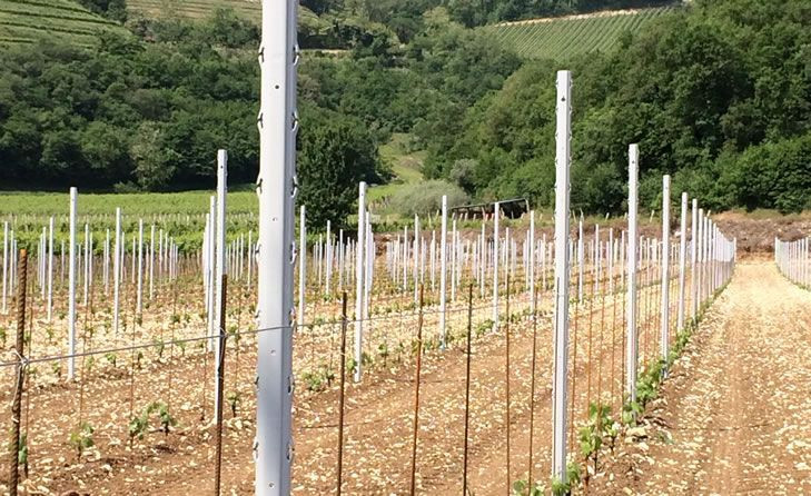 Stâlpi Beton pentru Pomi Fructiferi - Transport Gratuit