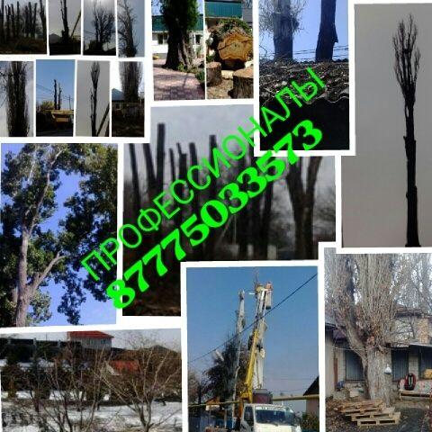 Спил деревьев в Алматы и Алматинской области!