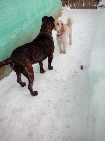 Ofer Pensiune canina Cazare canina Cazare pentru caini Giurgiu