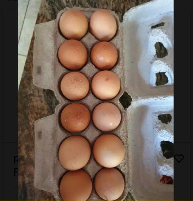 Vendo ovos frescos e faço entregas
