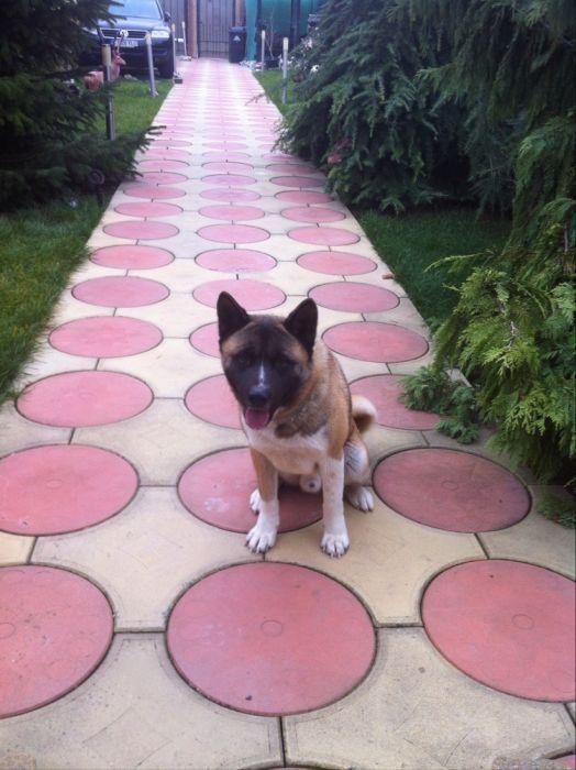 dresaj câini si pe perioada sărbătorilor
