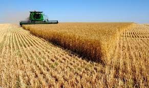 отходы, пшеница,овес, ячмень, отруби . Отгрузка с Костаная жд и автот