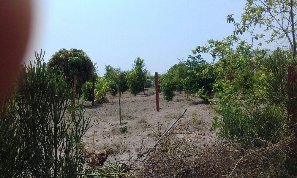 Fazenda 7hectares chipipa