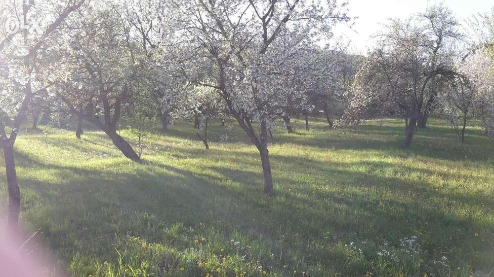 teren Deda Bistra