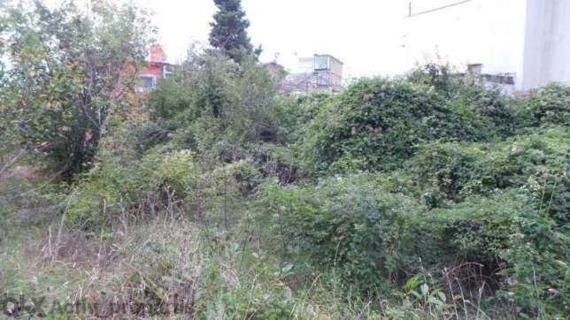 Почистване на дворни места и вилни имоти. гр. Варна - image 2